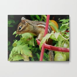 Maybe a tomato? Metal Print