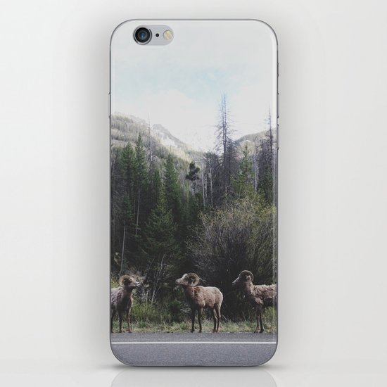Bighorn Sheep iPhone & iPod Skin
