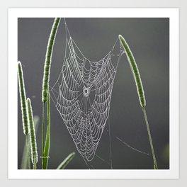 Dewy Web Art Print