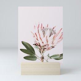 Protea, Flower, Leaves, Plant, Green, Scandinavian, Minimal, Modern, Wall art Mini Art Print