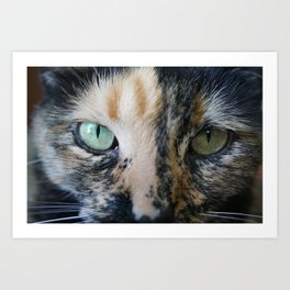 Cat Eyes: Tortoiseshell cat named Iris Art Print