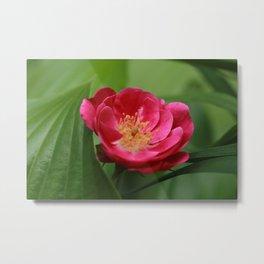 Floribunda Rose Metal Print