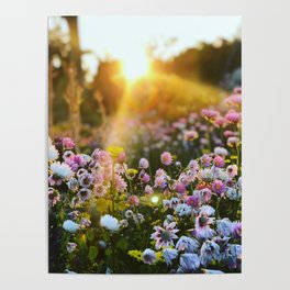 Magical Wildflowers Poster