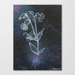 Bladder Campion in Space Canvas Print