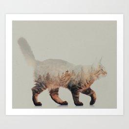 Cat: Maine Coon Art Print