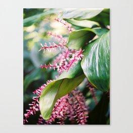Tropical Rio Flower Canvas Print