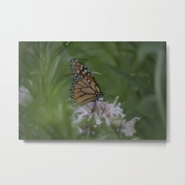 Monarch Butterfly X Metal Print