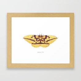 Imperial Moth (Eacles imperialis) Framed Art Print