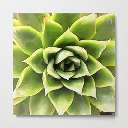 Green Succulent Close Up Metal Print