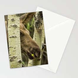 Hiding in Plain Sight - Moose Calf Stationery Cards
