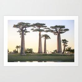 Baobab Avenue, Madagascar. Art Print