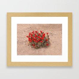 Sandia Cactus Flowers Framed Art Print