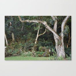 Waimea Valley Oahu Island  Hawaii Canvas Print