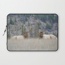 Elk shedding their antlers in Jasper National Park Laptop Sleeve