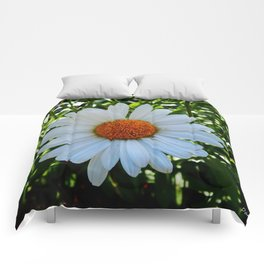 Single White Daisy Comforters