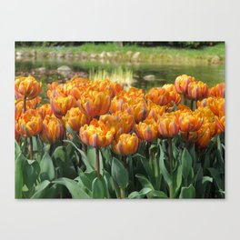 Les Tulipes Canvas Print