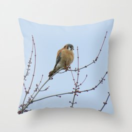 Sparrowhawk (Kestrel) 7 Throw Pillow