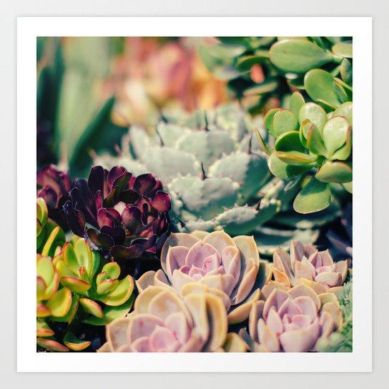 Cacti And Succulents I Art Print