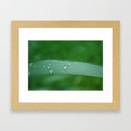 grass drop Framed Art Print