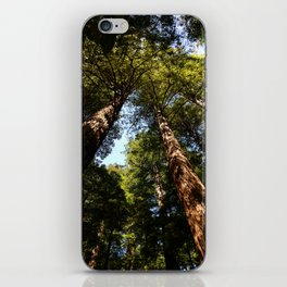 Sequioas Reaching  For The Sky iPhone Skin