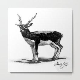 White-eared Kob Metal Print