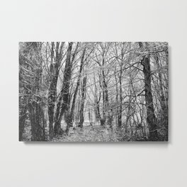 Winter Forest scenic. Metal Print