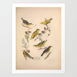 Bachmans Warbler Rathbones Warbler Carbonated Warbler Roscoes Yellow throat Warbler9 Art Print