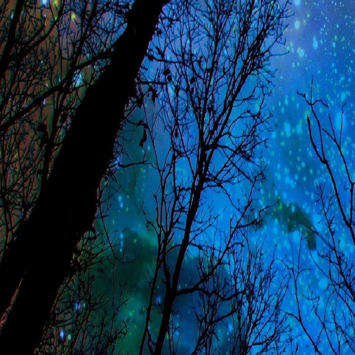 Black Trees Dark Blue Space Leggings