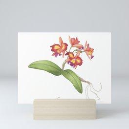 Red Orange Orchid Mini Art Print