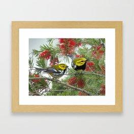 Black-throated Green Warbler Framed Art Print