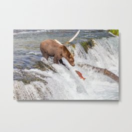 Grizzly bear face to face with salmon Metal Print