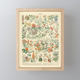 Wildflowers and Roses // Fleurs III by Adolphe Millot 19th Century Science Textbook Artwork Framed Mini Art Print