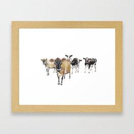 Cow Crowd Framed Art Print