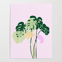 monstera plant on pink background Poster