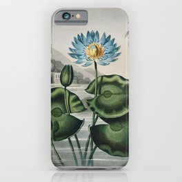 The Blue Egyptian Water-Lily from The Temple of Flora (1807) by Robert John Thornton iPhone Case