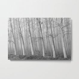 Foggy Poplars. BW Metal Print