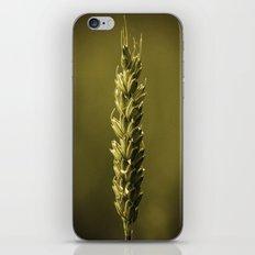 Corn iPhone & iPod Skin