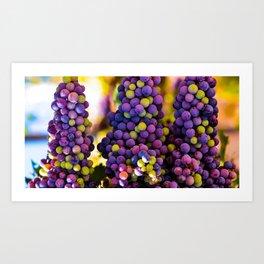 Grapes Hanging Art Print