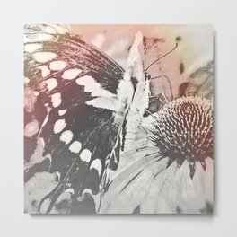 rose glow butterfly and coneflower Metal Print