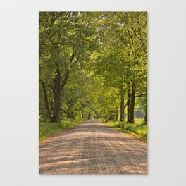 Wye Island Canopy Road Canvas Print