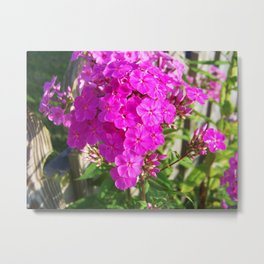 To Maryland Summers Metal Print