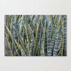 Snake Plants II Canvas Print