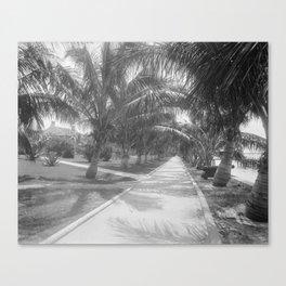 Vintage Black & White Palm Tree Trail Photograph (1897) Canvas Print