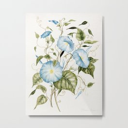 Morning Glories Metal Print