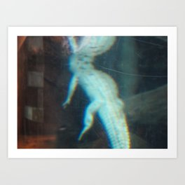 Albino Alligator 2 Art Print