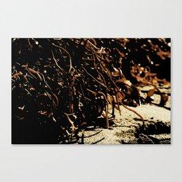 see weed Canvas Print