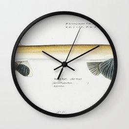 Antique fish gonorynchus fosteri sand fish drawn by Fe Clarke (1849-1899) Wall Clock