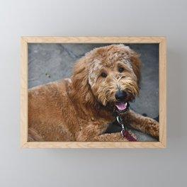 Good Doggo Framed Mini Art Print