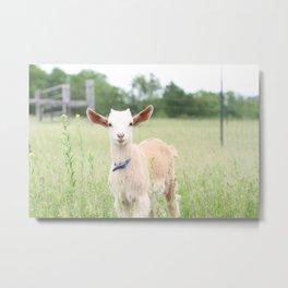 Angelic Baby Goat Color Metal Print