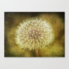 The Lion's Tooth Canvas Print
